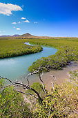 Mangrove, presqu'île de Uitoé, côte ouest Nouvelle-Calédonie