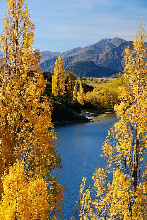 Autumn poplar trees next to Lake Wanaka, South Island, New Zealand - stock photo, fine art, canvas print