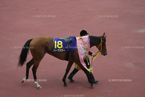 Harp Star,<br /> APRIL 13, 2014 - Horse Racing :<br /> Harp Star after winning the Oka Sho (Japanese 1000 Guineas) at Hanshin Racecourse in Hyogo, Japan. (Photo by Eiichi Yamane/AFLO)