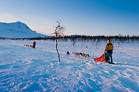 Arrenjarka, Jokkmokk, Swedish Lapland, Sweden, March 2013. Under the guidance of Tor Henrik Buljo we harness the Alaskan Huskies and head out on the trail, through ancient Sami territory, towards the mountains in the North. We travel by dog sled from the old growth pine forest, through the alpine birch forest until we reach the high mountain area. Where we will see the mountain peaks of Sarek and Padjelanta National Parks. Part of our dogsledding trip follows the historical 'Kungsleden', king's Trail.  Photo by Frits Meyst/Adventure4ever.com