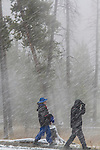 People are walking in the snow in Yellowstone. Snow is blowing.