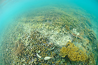 A coral reef damaged by boat traffic, Gili Trawangan, Lombok, Indonesia.