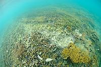 A coral reef damaged by boat traffic, Gili Trawangan, Lombok, Indonesia.