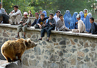 Children looking at a bear in Kabul zoo. Kabul,Afghanistan,Asia.