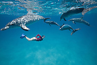 RW4796-D. Atlantic Spotted Dolphins (Stenella frontalis), resident pods of wild dolphins in the Bahamas off Bimini and Grand Bahama Island offer eco-tourists from around the world a superb encounter swimming with the playful marine mammals. Bahamas, Atlantic Ocean.<br /> Photo Copyright &copy; Brandon Cole. All rights reserved worldwide.  www.brandoncole.com