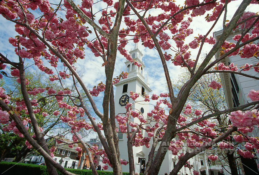 Usa,Newport, RI - Springtime view of Trinity Church through a cherry blossom tree.