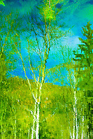 Aspen trees reflected in the blue waters of Walden Pond