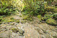 Copland track through native, lush green rainforest and stream in Copland Valley, Westland National Park, West Coast, South Westland, World Heritage Area, New Zeala