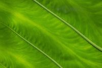 Background - details of a leaf