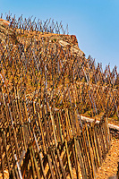 Graphic geometric vineyard with vines trained in 'en echalat' with supporting wooden stakes, winter pruned with no branches or leaves. Terraced vineyards in the Cote Rotie district around Ampuis in northern Rhone planted with the Syrah grape. Ampuis, Cote Rotie, Rhone, France, Europe