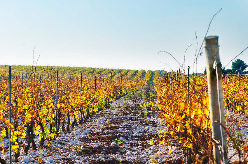 Chateau Mire l'Etang. La Clape. Languedoc. France. Europe. Vineyard.