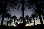wide angle photograph by Paolo Diego Salcido-of palm trees silhouette at sunset