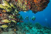 Scuba Divers <br /> Little St. James<br /> Virgin Islands
