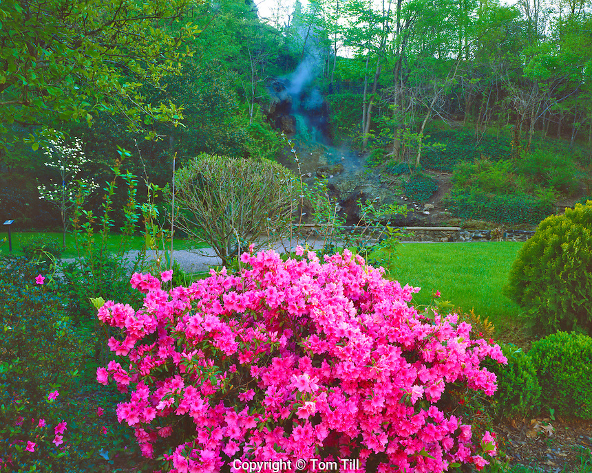 Spring Azalea Blooms, Hot Springs National Park, Arkansas