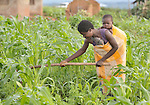 A baby on her back, a woman works in her field in Matuli, a village in northern Malawi.