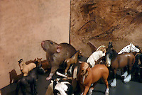 Sybil the rat does the parade with the model horses with her head held high