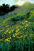 Stock photo field of flowers