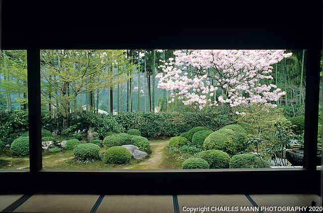 At the Jiikko-in in Ohara, visitors can sit on a tatami mat and sip green tea while contemplating a serene meditation garden featuring blooming cherry trees.