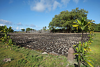 Marae Taputapuatea, c. 1000 AD, a large religious and ceremonial temple site with a 60 x 45m stone courtyard and an ahu or altar made from 3m high standing stones cut from coral, at Taputapuatea, at Te Po, in the Opoa valley, on the island of Raiatea, in the Leeward Islands, Society Islands, French Polynesia. This marae marks the spot where Ta'aroa, creator and father of all Polynesian gods, first stepped on the earth. In the 17th century, it was rededicated to the god Oro, son of Ta'aroa and god of beauty, fertility and war. This site was a meeting place and sacrificial site for travellers from all over the Pacific. In the foreground is a stone tiki sculpture, representing Ti'i, a half-human half-god ancestor who is believed to be the first man, a protective statue. Picture by Manuel Cohen
