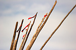 Log sticks with red ribbons tied to the top of the poles sticking out of a Sioux Indian Tipi