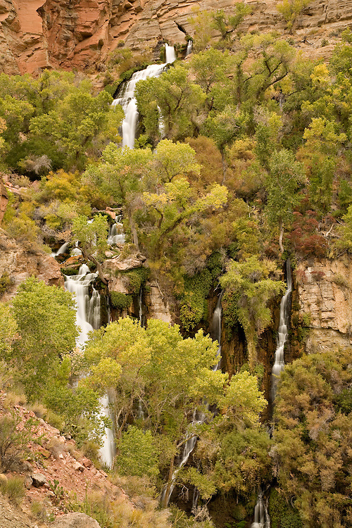 As surrounding Fremont cottonwoods (Populus fremontii) take on autumn colors, Thunder Spring emerges from Thunder Cave at the Grand Canyon National Park, Arizona