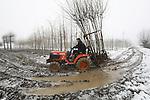 Foto: VidiPhoto<br /> <br /> DODEWAARD - Aanmodderen in de sneeuw. Boomkweker Dirk-Jan Huibers uit Dodewaard haalt woensdag 250 dakplatanen uit de halfbevroren grond van een boomperceel in Hien bij Dodewaard. Het gaat om een spoedbestelling die nog net afgewerkt kan worden voordat de vorst te diep in de grond zit om de bomen te kunnen rooien. De platanen krijgen een dakvorm. Dat gebeurt in de loop van deze week in een 'verwarmde' schuur. De bestelling komt uiteindelijk via een tuincentrum bij de consument terecht. De meeste boomkwekers houden het werk buiten voorlopig even voor gezien en wachten tot het weer gaat dooien.