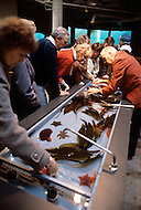 December 11, 1984 - Monterey Bay, California. Families touch aquatic life while visiting the Monterey Bay Aquarium. The Monterey Bay Aquarium, located on Cannery Row of the Pacific Ocean in Monterey California, was founded in 1984 and holds thousands of plants and animals. The annual attendance of the aquarium is 1.8 million visitors.