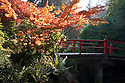 WA08902-00...WASHINGTON - Autumn color along Heart Bridge in Seattle's Kubota Garden.