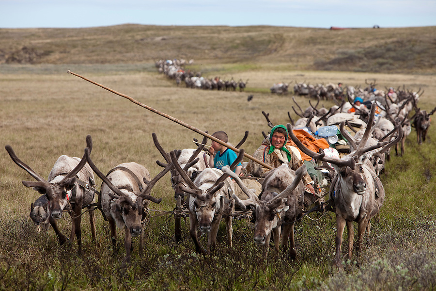Bovanenkovo ,Yamal Peninsula, Russia, 09/07/2010..The Nenets, indigenous nomadic reindeer herders, travel on sledges heading north to the Russian Arctic coast with their herd of 5,000 reindeer.