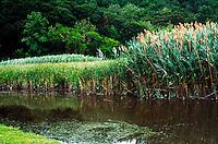 WETLANDS<br /> Iona Island, NY