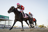 OLDSMAR, FLORIDA - FEBRUARY 11: McCracken #8, ridden by Brian Joseph Hernandez (pink hat), wins the Sam F. Davis Stakes at Tampa Bay Downs on February 11, 2017 in Oldsmar, Florida (photo by Douglas DeFelice/Eclipse Sportswire/Getty Images)