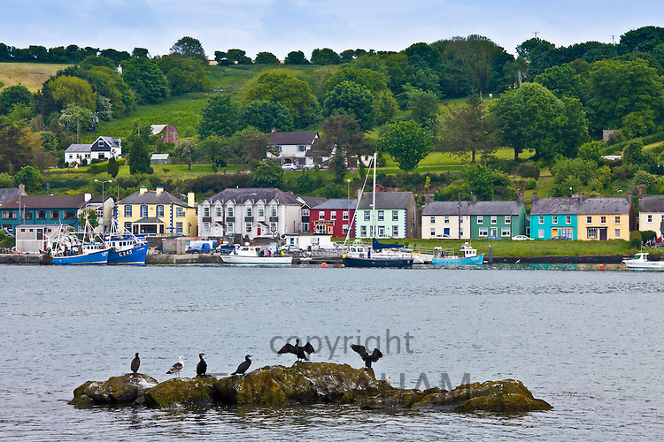 Cormorant birds and Black Backed Gull in Courtmacsharry Bay, County Cork, Ireland