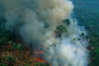 Aerial of rainforest being burned to clear land to make pasture for cattle ranching, Brazil, Para, Amazon region.