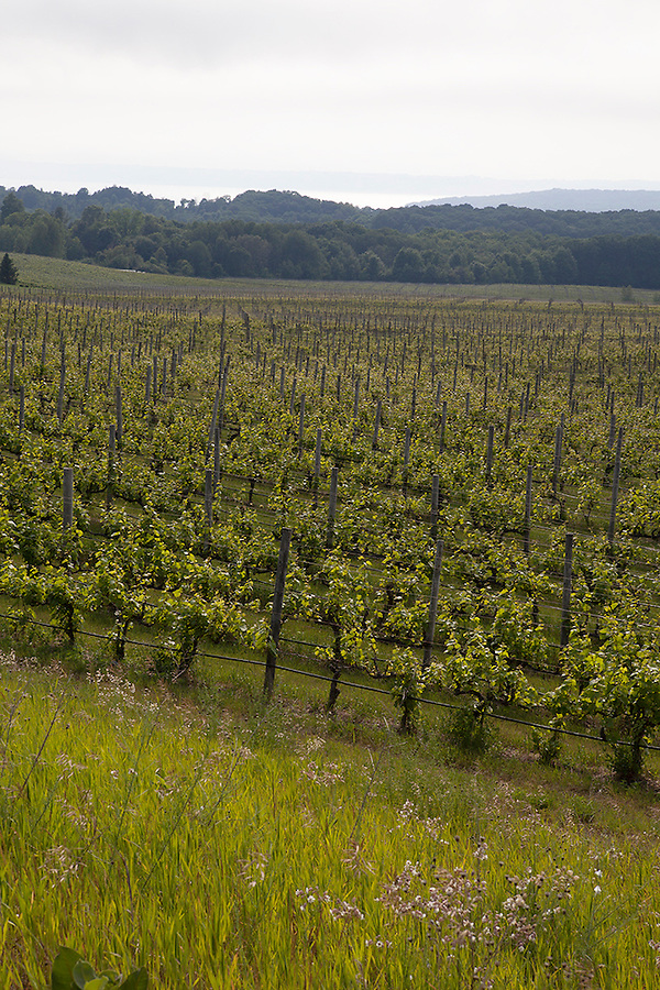 Chateau Grand Traverse Vineyards and Winery, Old Mission Peninsula, Lake Michigan, Traverse City area, Michigan, USA