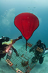 Global Underwater Explorers (GUE) divers remove an abandoned lobster trap as part of an ongoing environmental clean up of ghost nets and abandoned fishing gear with Ocean Defenders Alliance and ghostfishing.org