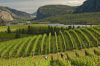 Wine - Canada