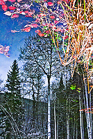 &quot;RED LEAF SKY&quot;<br />