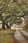 Southern Drive Live Oak Trees Tree Oaks Plantation Road South Carolina