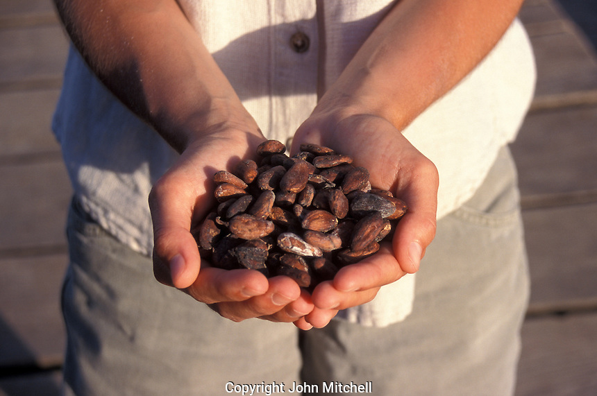 Woman holding organically grown cacao beans at a plantation in Bocas del Toro province, Panama