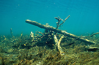 Underwater Scene-Woody Habitat<br /> <br /> ENGBRETSON UNDERWATER PHOTO