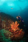 11 August 2009: SCUBA Diver Sally Herschorn explores the coral formations at Captain Don's Reef in Hato, Bonaire. Mandatory Photo Credit: Ed Wolfstein Photo