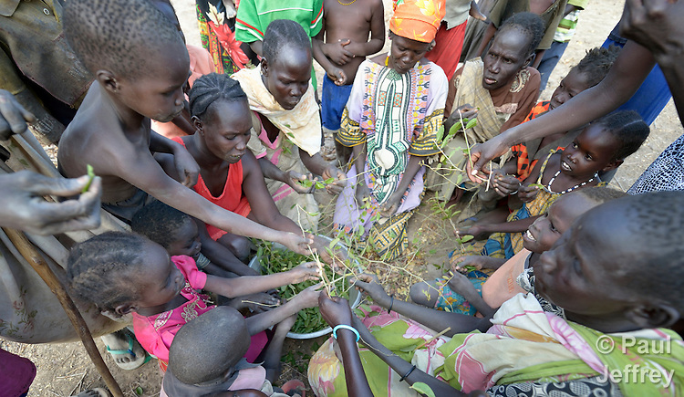 "Hungry people eat leaves of the lalob tree in a camp for internally displaced people in Manangui, South Sudan. The tree (Balanites aegyptiaca) is a common ""hunger food"" in the region."