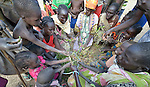 """Hungry people eat leaves of the lalob tree in a camp for internally displaced people in Manangui, South Sudan. The tree (Balanites aegyptiaca) is a common """"hunger food"""" in the region."""