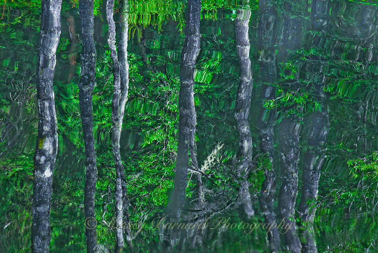 &quot;BAFFLING BIRCH&quot;<br />