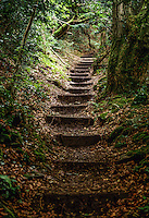 England, Gloucestershire.  Offa's Dyke Footpath between Chepstow and Tintern.