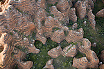 This extraordinary aerial view of beehive-shaped rocks depicts part of Bungle Bungle, a newly formed Australian national park. Western Australians discovered this intricate landscape in the 1970s, but the region has been a sacred Aboriginal site for tens of thousands of years. The Australian government permitted only a few developed trails through this sacred landscape.