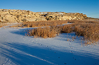 Marsh in the winter in the Bighorn Basin of Wyoming