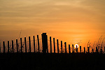 Sunset on the beach at Quintana, near Freeport, with dune fence and beach grass, Gulf of Mexico, Texas.