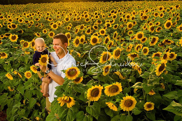 Charlotte Field of Dreams annual sunflower field photoshoot for ...