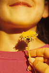 "Young girl ( 6 years old) with dandelion put under her chin smiling summer game with mom "" Likes Butter"" Bothell Washington State USA  MR"